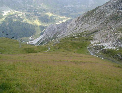 Alpenbegrünung aber richtig