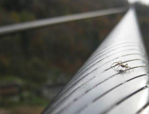 Warum findet man häufig Spinnen auf Stützen und Seilen?